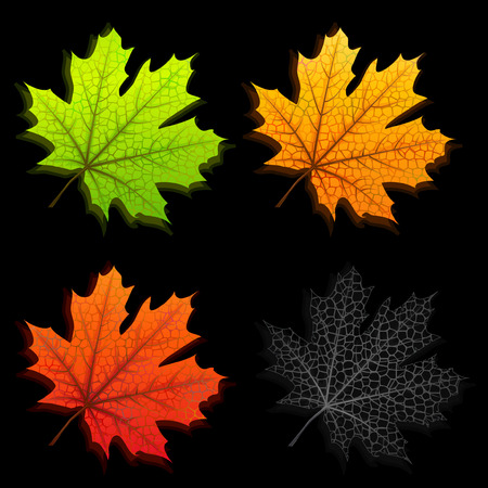 Autumn maple leaves isolated on black background Stock Vector - 7311260
