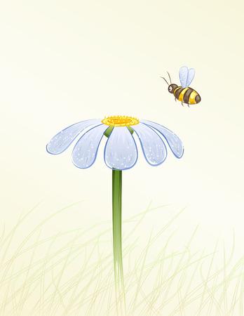 kamille: Blaues G�nsebl�mchen und eine Biene sammeln Honig in Aquarell malte (Vektor-Bild, andere Blumen sind in meiner Galerie)