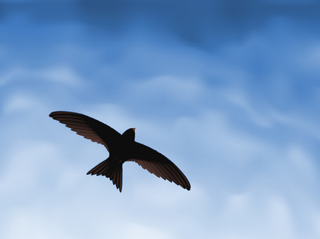 Swallow in the sky Vector