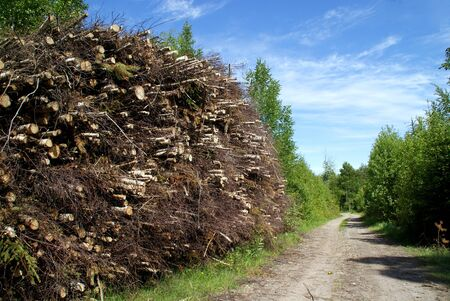 A stack of wood fuel for biomass by forest road photo