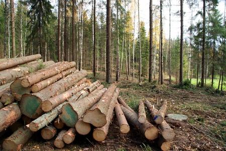 Extracción maderera en el bosque
