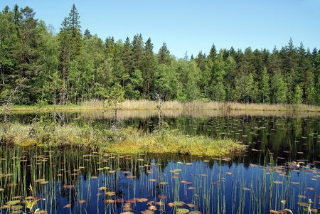 Calm Marshland Lake in Finland