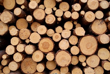 Pine Logs Background photo