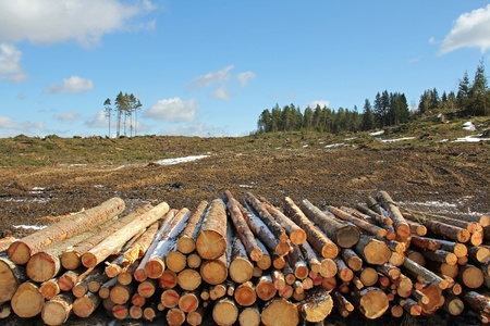 Forest clear cut with stack of logs on the front  Banco de Imagens