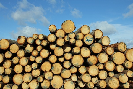 Cut and stacked spruce logs with blue sky and fairweather clouds