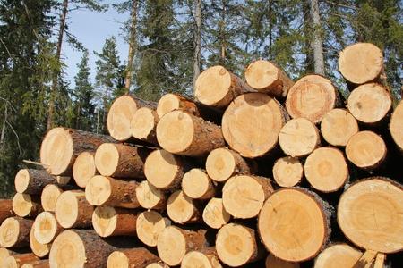 Cortar y apilar la madera de pino en los bosques de abeto en un día claro en la primavera Fotografiado en Salo, Finlandia 03 2012