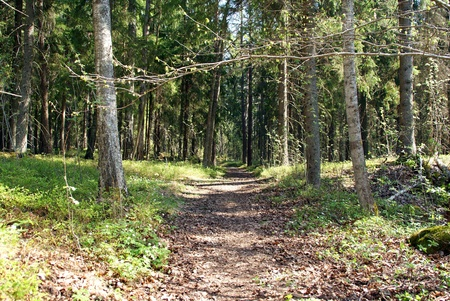 Footpath through natural forest in springtime