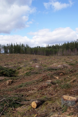 Forest clearcutting or clearfelling  Stock Photo