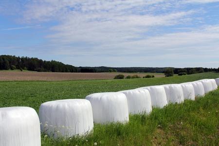 Los fardos de forraje envuelto en plástico de color blanco en el borde del campo verde en verano