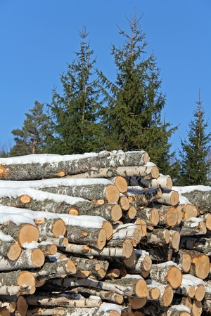 Stack of birch logs covered with snow with spruce trees and blue sky on the background  photo