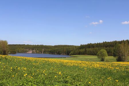 Country landscape in May with green field, Dandelion flowers, blue sky and forest   photo