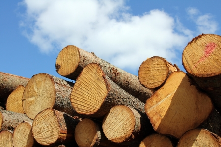 Stack of wooden logs and blue sky with white clouds