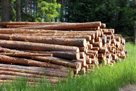 Stack of pine logs in green grass at the edge of summer forest in Finland.