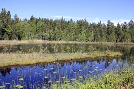 Blue, calm marshland lake Kolmperä in Salo, South of Finland at summer.