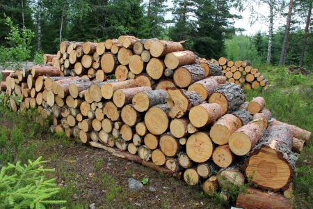 Small firewood logs stacked up neatly in summer forest in Finland. Banco de Imagens