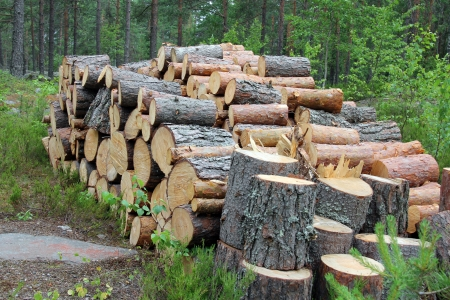 Small firewood logs stacked up neatly in summer forest in Finland. Stock Photo