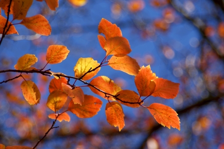 Colorful autumn leaves against blue sky photo