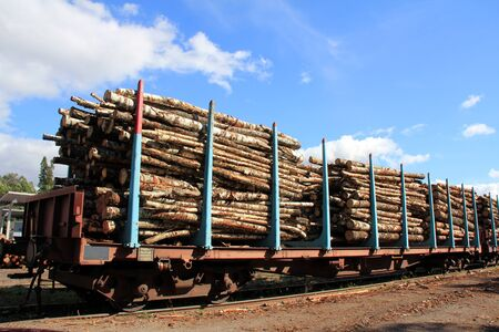 logging railways: Railcars of wood at the train station ready for transport   Stock Photo