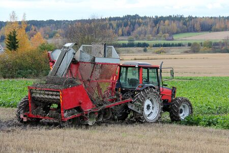 Sugar beet harvester and red tractor by field of sugar beet in autumn  photo