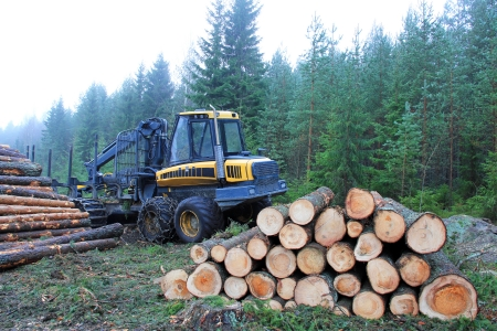 Forwarder and stacks of logs at the edge of forest in autumn mist  Stock Photo