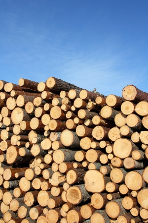 Stack of wooden logs of different sizes against blue sky.