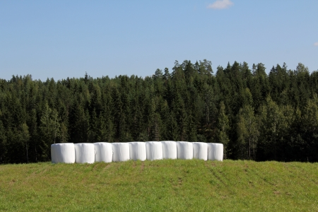 Bales of silage wrapped in white plastic on a green summer field with forest and blue sky background Stock Photo - 17040748
