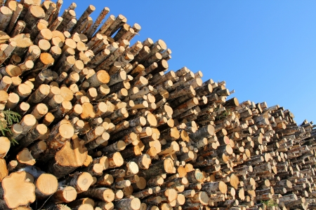 Stack of logs of different species of trees against bright blue sky  photo