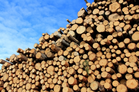 Stacked wood for manufacturing pulp or for power and energy with blue sky and few clouds as background.