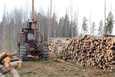 Old forestry tractor and stacks of logs at early spring forest logging site in Finland.