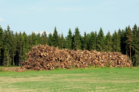 Heap of stump wood at the edge of coniferous forest as logging residue, used as fuel wood. Stock Photo
