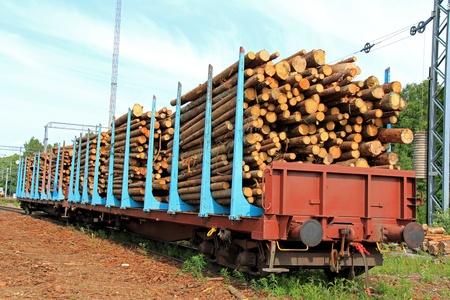 logging railroads: Tronchi di legno in vagoni in una stazione ferroviaria in attesa per il trasporto.