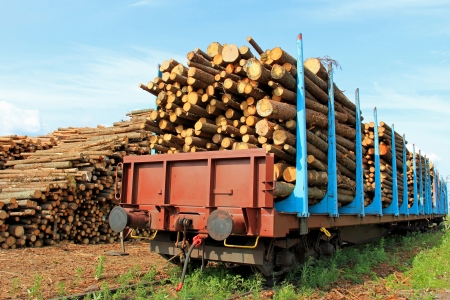 logging railroads: Rail cars full of wooden logs at the railway station ready for transport, with stacks of logs on the background. Stock Photo