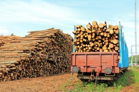 logging railroads: Conservazione del legno alla stazione ferroviaria e vagoni ferroviari pieni di legno pronti per il trasporto.