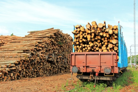 logging railways: Storage of wood at railway station and rail cars full of wood ready for transport. Stock Photo
