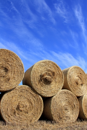 Stack of round hay bales by harvested field against blue sky in autumn  photo