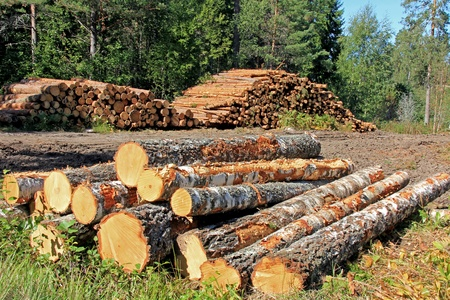 Stacks of logs at a forest logging site   photo