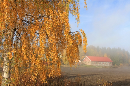 An autumnal rural landscape in morning mist with a yellow foliage of a birch tree and a barn, ploughed field, and pale blue sky as a background. photo