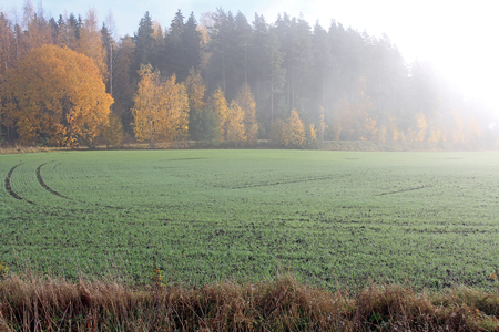 Morning fog over a winter wheat field in autumn in the countryside with seasons vibrant colors. photo
