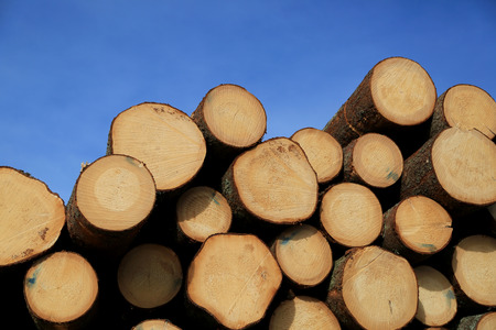Stack of wooden logs with annual growth rings showing, with blue sky background.