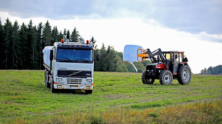 made in finland: SALO, FINLAND - SEPTEMBER 6, 2014: Unidentified farmer stacks silage bales onto flat bed Volvo FH12 truck with Valmet tractor on a September evening. Silage can be made from many field crops.