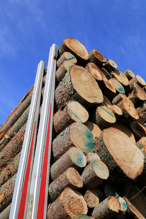 logging truck: Detail of spruce logs stacked up on a logging truck trailer, with background of blue sky. Stock Photo