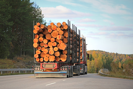 logging truck: Rear view of logging truck on rural road with full load of timber.