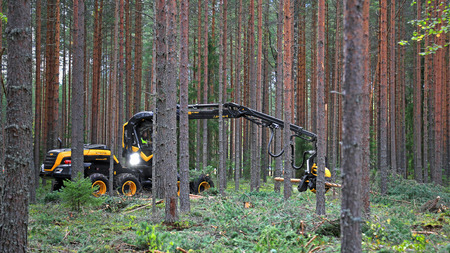 JAMSA, FINLAND - SEPTEMBER 2, 2016: Operator harvests young forest with Ponsse Harvester Scorpion King in a work demonstration on the heavy machinery exhibition FinnMETKO 2016 in Jamsa, Finland.