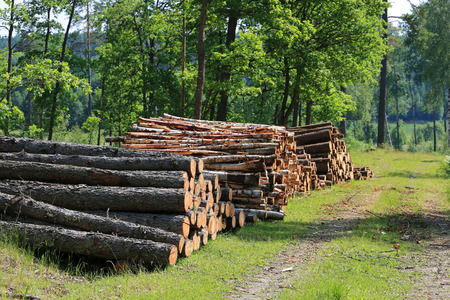 felled: Stacks of logs by rural road on a beautiful day of summer with green oak trees on the background.