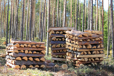 combustible: Three neat stacks of chopped and halved pine logs for firewood in spring forest on a beautiful day. Stock Photo
