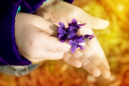 tuft: Tuft of violets in child