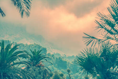 moutains: Palms and moutains in the morning fog. Pink vintage photo effect. Vacation background