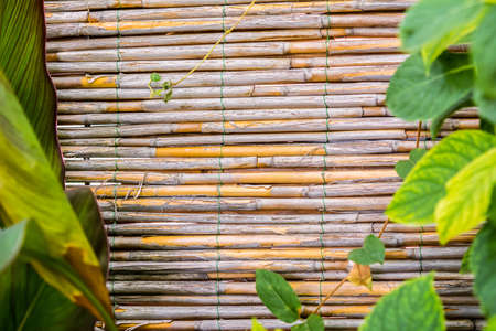 bamboo stick: Bamboo texture with green leaves. Vacations tropical background Stock Photo