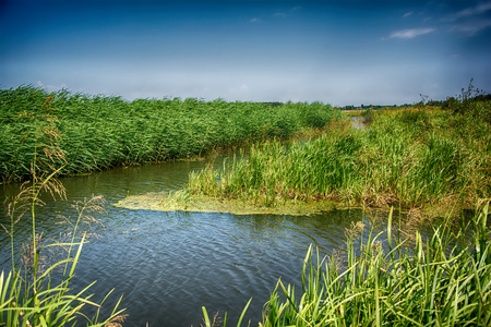 cane creek: Windy landscape with river and reed. Nature background Stock Photo