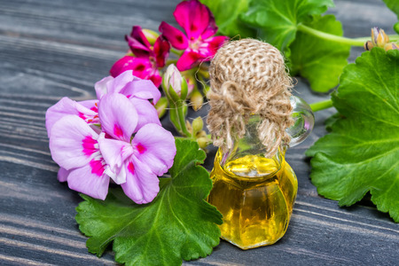 Essential geranium oil in bottle and geranium flowers